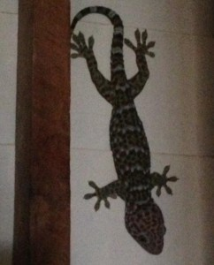 This was on our wall in the morning in the rustic bungalow. Over a foot long, no doubt my screams were heard for yards!